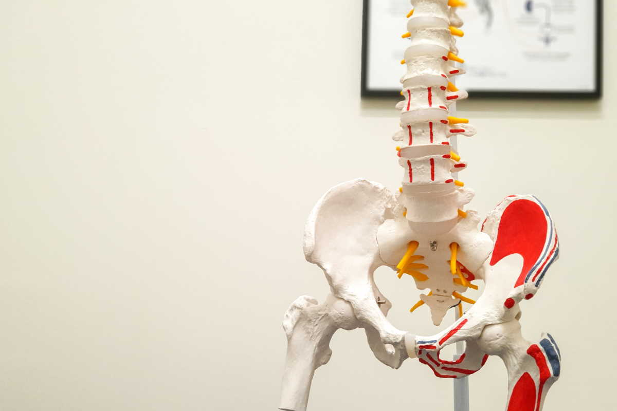 Spine - Precisely Chiropractic